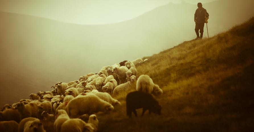 Feeding The Shepherds